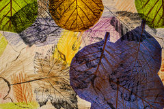 Afdrukken van bladeren stock foto's
