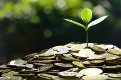 Affär besparing, tillväxt, ekonomiskt begrepp royaltyfri fotografi