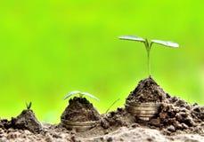Affären/finans på naturen planterar begrepp royaltyfria foton