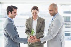 Affärskollegor som tillsammans rymmer växten Arkivfoton
