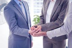 Affärskollegor som tillsammans rymmer växten Arkivbilder