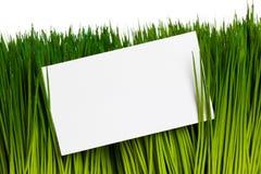 Affärskort och grönt gräs Fotografering för Bildbyråer