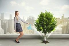 Affärskvinna som bevattnar det gröna trädet på stadsbakgrund Arkivfoto