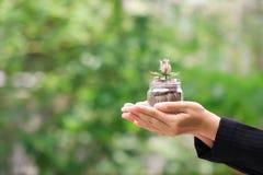 Affärskvinnainnehavblomma att göra från sedel på myntpengar i glasflaska på grön bakgrund, räntesatser och investering arkivbild