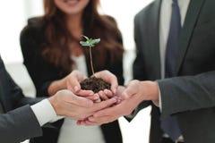 Affärslag som tillsammans rymmer den nya gröna groddcloseupen Royaltyfri Foto