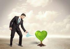 Affärsman som bevattnar det hjärta formade gröna trädet Royaltyfri Foto