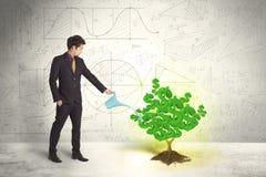 Affärsman som bevattnar ett växande grönt träd för dollartecken royaltyfri bild
