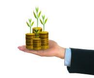 Affärsman som rymmer det nya gröna lilla trädet på guld- mynt i hand Arkivbilder