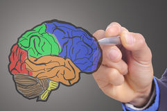 Affärsmanhanden skriver den Head hjärnan Arkivfoto
