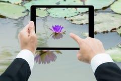 Affärsmanhandminnestavla som tar bilder den rosa lotusblommablomman på th Royaltyfri Foto
