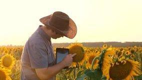 Affärsmannen med minnestavlan undersöker hans fält med solrosor bonden går i ett blomma fält agronomman lager videofilmer
