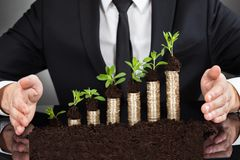 Affärsmans händer som skyddar mynt i unga träd royaltyfri bild