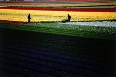 Affaires colorées de la Hollande Image libre de droits