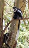 Affaires de singe photo libre de droits
