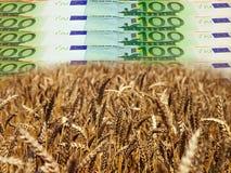 Affaires rentables d'agriculture Photo libre de droits