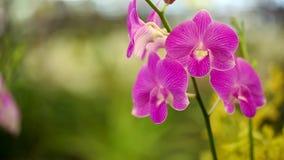 Affare del giardino del letto di fiore dell'azienda agricola della piantagione dell'orchidea archivi video