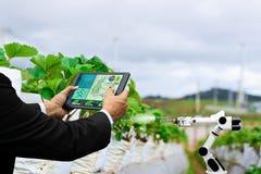 Affare dell'agricoltore che tiene un macchinario agricolo del braccio della compressa del robot del lavoro di cura astuta della f immagine stock