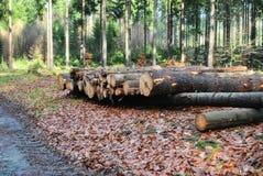 Affare della foresta Fotografia Stock