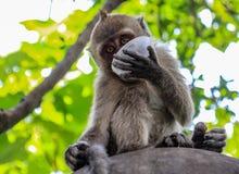 Affare di scimmia divertente fotografia stock