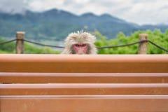 Affe über Bank Stockbilder