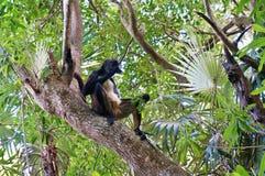 Affe über einem Baum Lizenzfreie Stockbilder