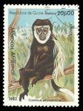 Affe, überzogenes Guereza Stockbilder
