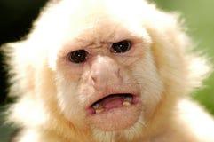 Affe  stockbilder