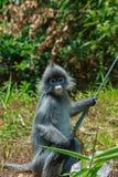 Affe, Affe, Tier Lizenzfreies Stockfoto