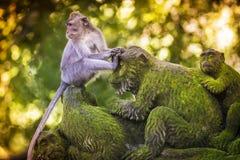 Affe am Affe-Wald Stockbilder