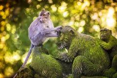 Affe am Affe-Wald Stockfotografie