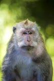 Affe am Affe-Wald Lizenzfreie Stockbilder