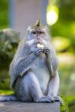 Affe am Affe-Wald Lizenzfreie Stockfotografie