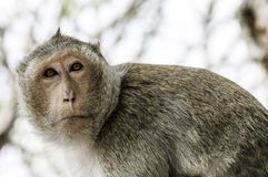 Affe allein Stockfotos