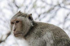 Affe allein Lizenzfreie Stockfotos