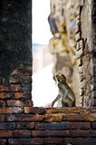 Affe am alten Tempel Stockfotografie