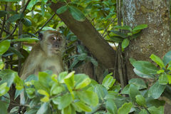 Affe angeschmiegt im Baum Lizenzfreie Stockbilder