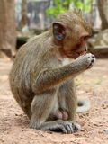 Affe an Angkor-Standort, Kambodscha Lizenzfreie Stockfotos