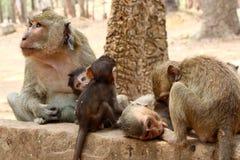 Affe an Angkor-Standort, Kambodscha Lizenzfreie Stockfotografie