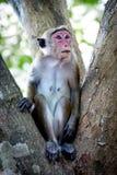 Affe anong Bäume im Dschungel Lizenzfreie Stockfotos