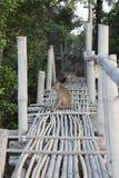 Affe auf Bambusbrücke Lizenzfreies Stockbild