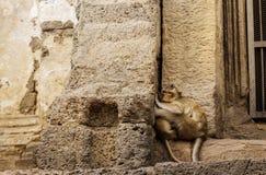 Affe auf dem alten Ziegelstein Lizenzfreie Stockfotos