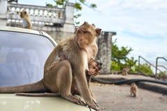 Affe auf dem Auto Stockfoto