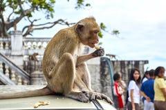 Affe auf dem Auto isst thailand Lizenzfreie Stockbilder