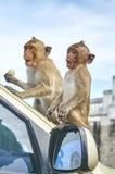 Affe auf dem Auto isst thailand Lizenzfreie Stockfotos