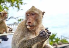 Affe auf dem Auto isst Thailand Lizenzfreies Stockbild