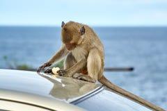 Affe auf dem Auto isst, Thailand Stockfotografie