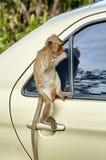 Affe auf dem Auto isst Thailand Stockbilder
