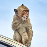 Affe auf dem Auto isst Thailand Stockfoto