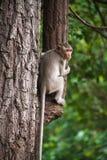 Affe auf dem Baum; Stockfotos