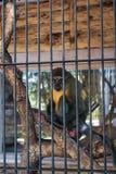 Affe auf dem Baum hinter Gittern Stockfotografie